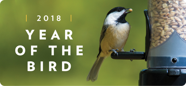 2018 Year of the Bird